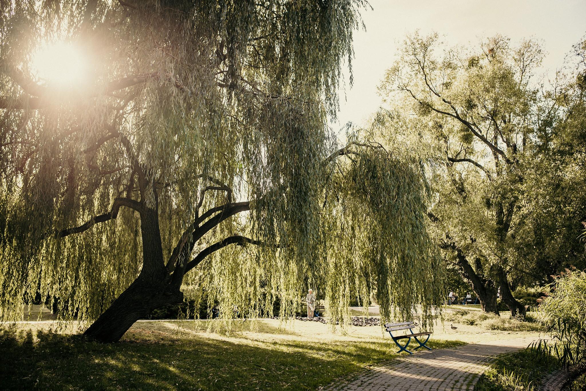 park sowińskiego zachód słońca